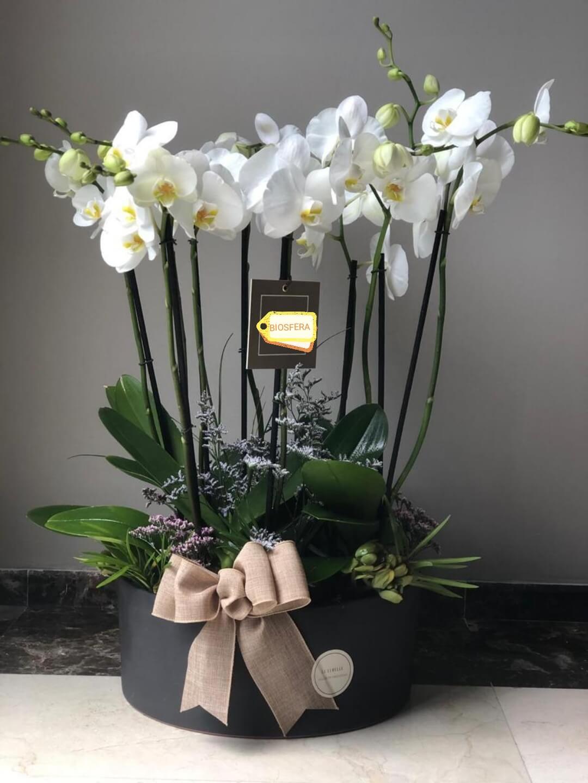 orquideas/001.jpg