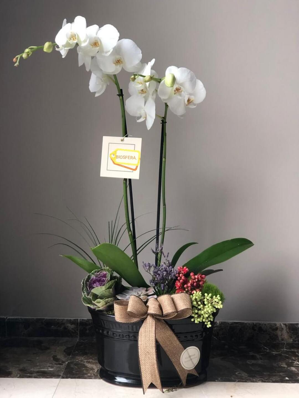 orquideas/002.jpg