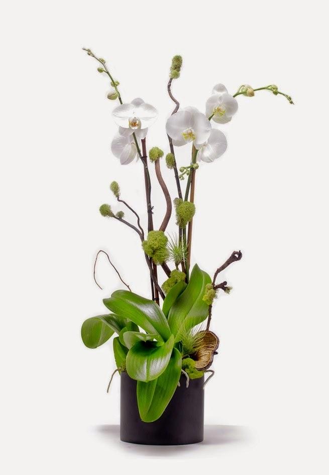 orquideas/003.jpg