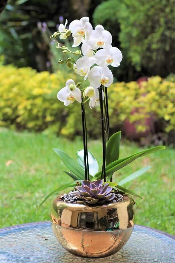 orquideas/005.jpg