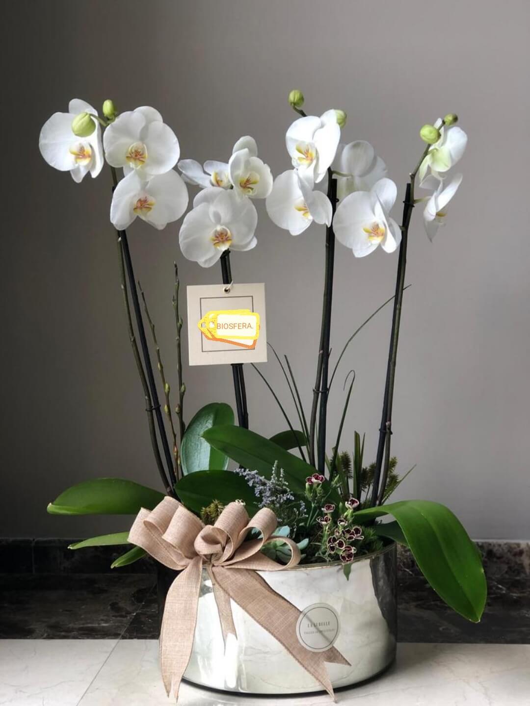 orquideas/010.jpg