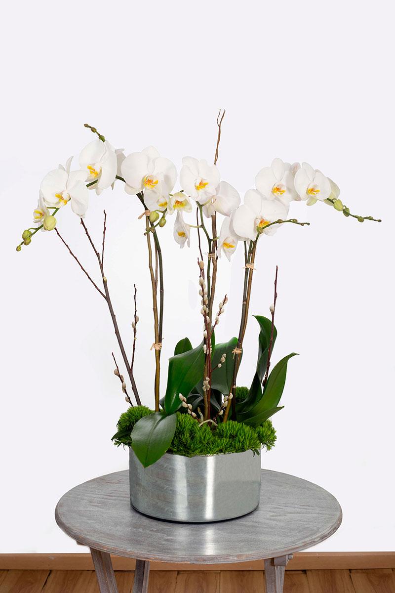 orquideas/012.jpg
