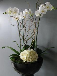 orquideas/013.jpg