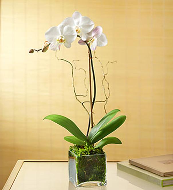 orquideas/014.png