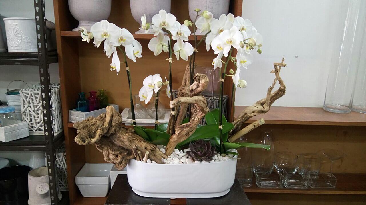 orquideas/020.jpg