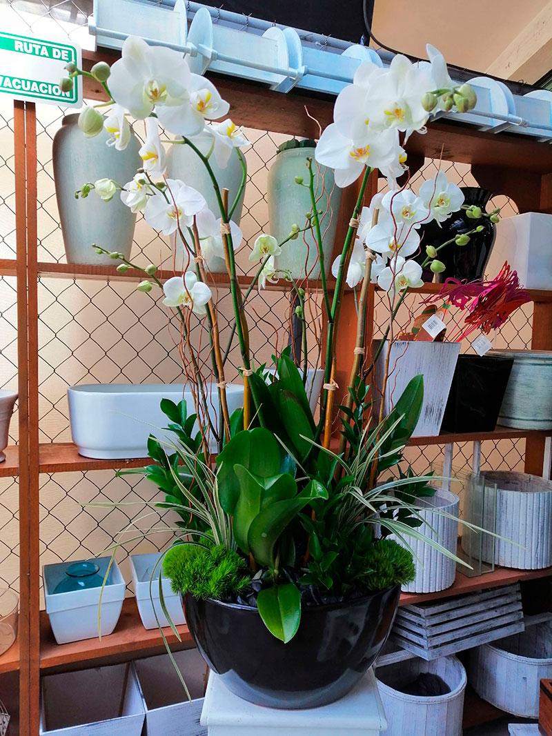 orquideas/021.jpg