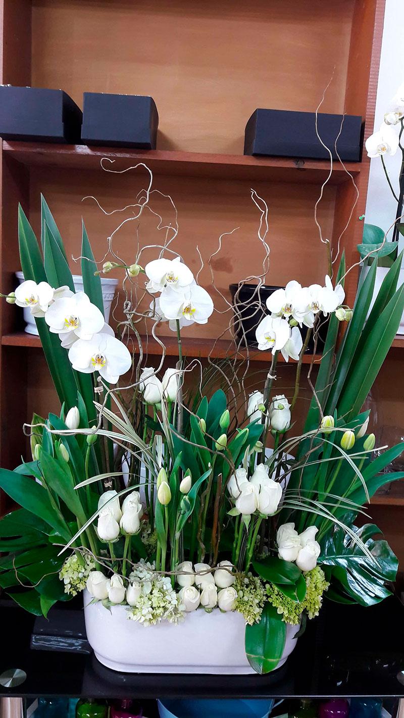 orquideas/022.jpg